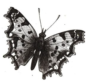mariposa-dibujo